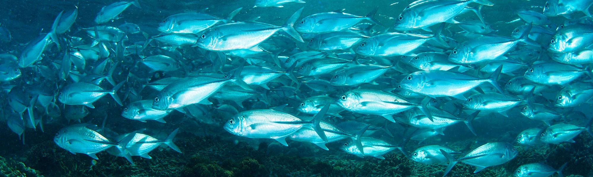 Los nutraceuticos están creados con productos procedentes del mar